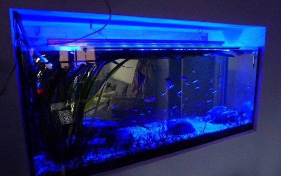 oświetlenie LED akwarium