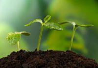 Jak możemy zadbać o swoje rośliny?