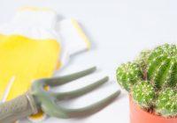 Flora i fauna w każdym domu