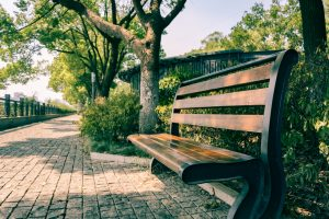 kostka brukowa w parku
